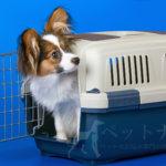 犬が安心できるお家。ハウストレーニングの方法