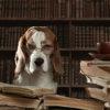 頭が良い犬とは?賢い犬種ランキング