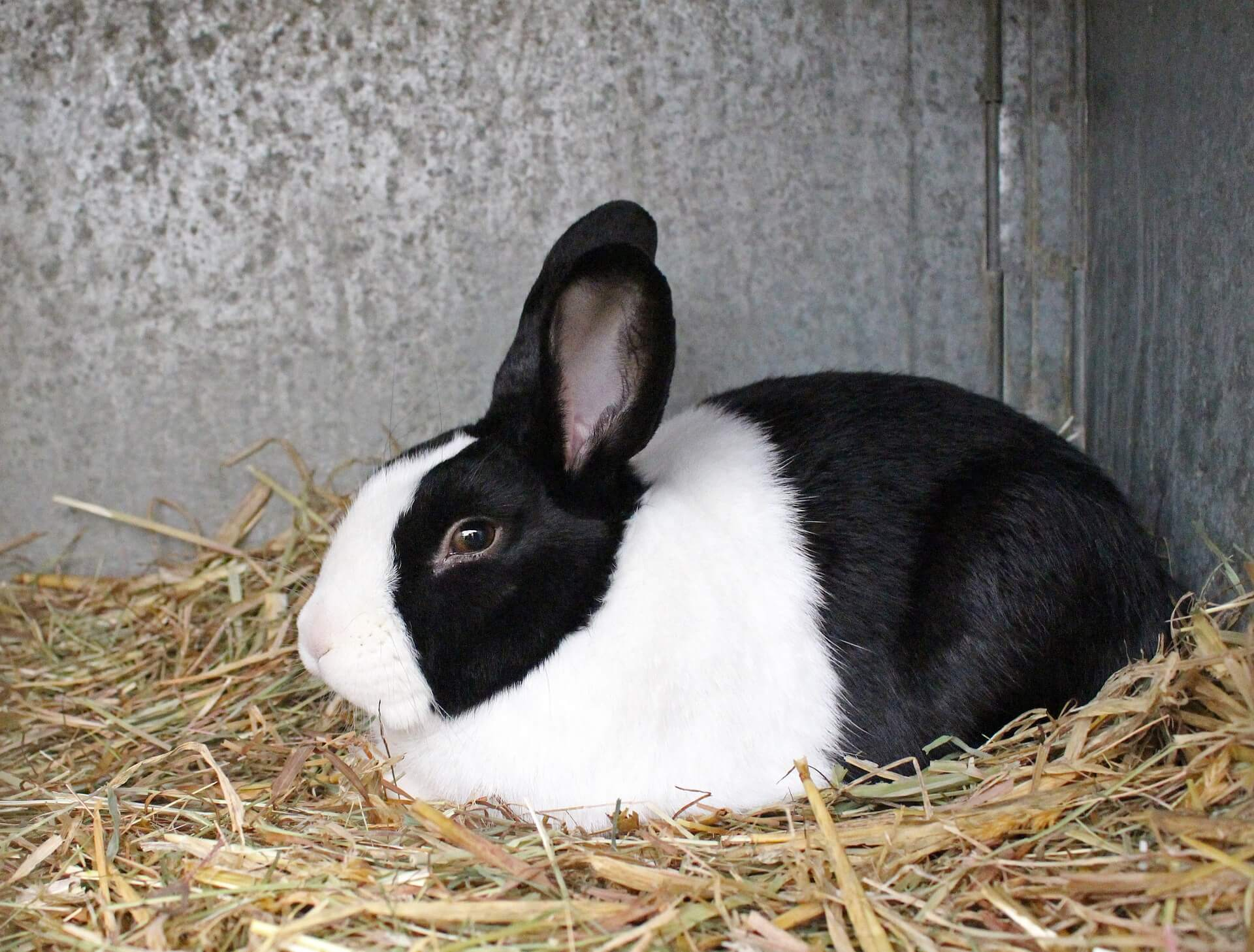 パンダウサギの写真