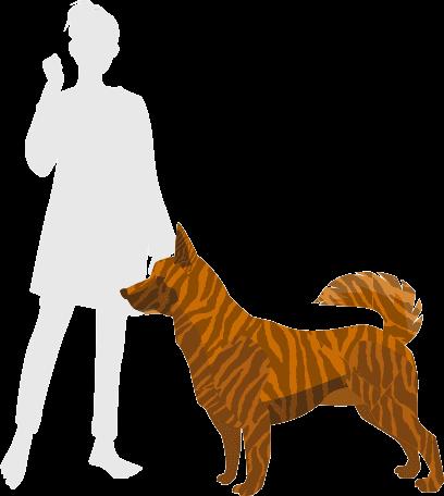 甲斐犬と人間の比較