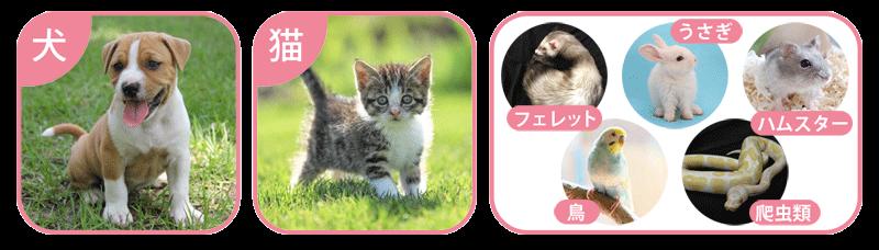 ペット保険に入れる動物の種類