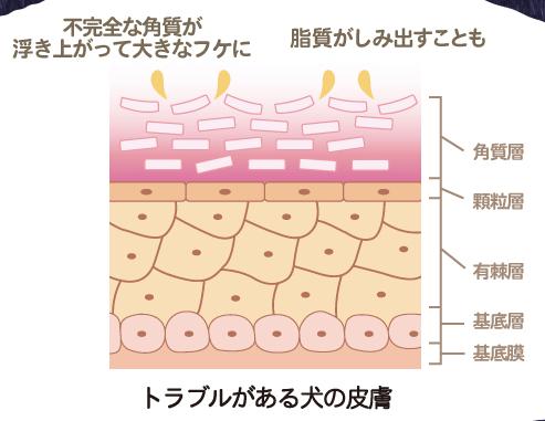犬の皮膚構造