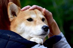 犬を抱っこ