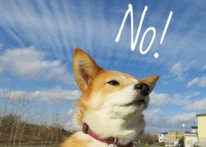 否定をする犬